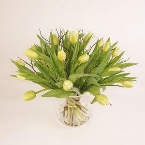 Tulpen winterswit